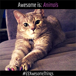 22 Awesome Things #20: Animals